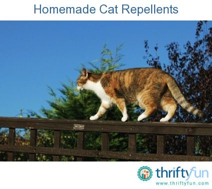 This guide is about homemade cat repellents. There are many areas of the home and garden that you may want to keep the cats out of.