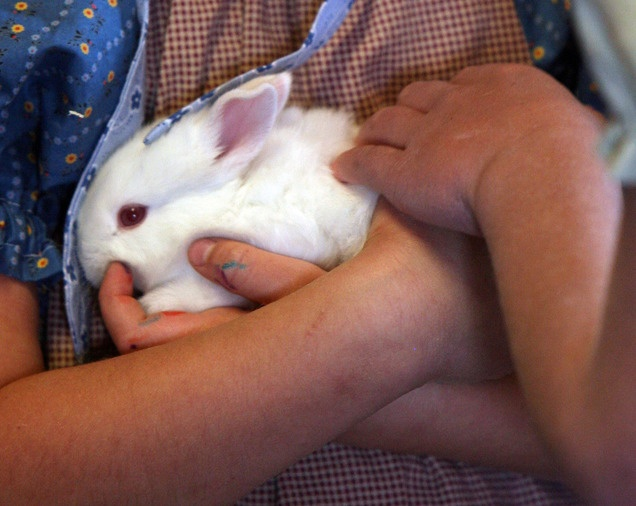 A bunny at the baby animal barn at This Is the Place Heritage Park in Salt Lake City.