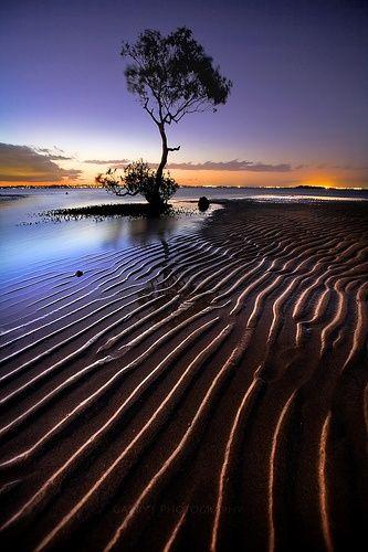 Sunset over the mangroves on Moreton Bay