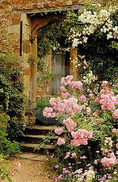 rose is my favourite ..i just love rose garden.