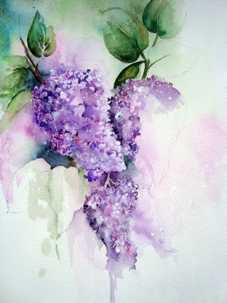Watercolor paintings of lilacs in this photo you can for How to paint simple watercolor flowers