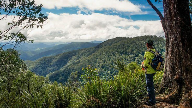 Barrington Tops National Park, Hunter Valley, NSW, Australia.