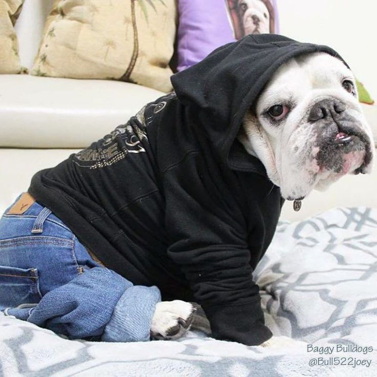 ♥ Baggy Bulldogs ♥                                                                                                                                                                                 More