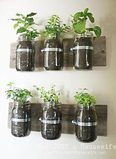 Hose Clamps & wood... great plant holderGardens Ideas, Mason Jar Herbs, Indoor Herbs, Growing Herbs, Herbs Gardens, Mason Jars Herbs,  Flowerpot, Kitchens Herbs, Wall Planters