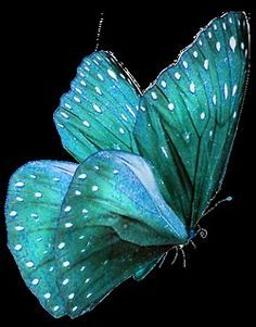 Gorgeous teal colored butterfly