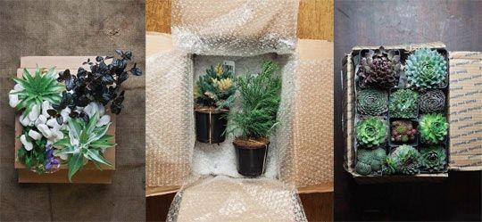 The Best Sources for Mail-Order Plants — Garden Design Magazine