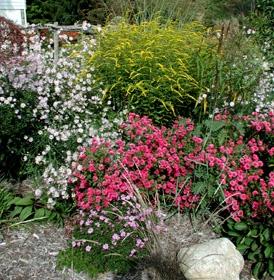 Nice Butterfly Gardens