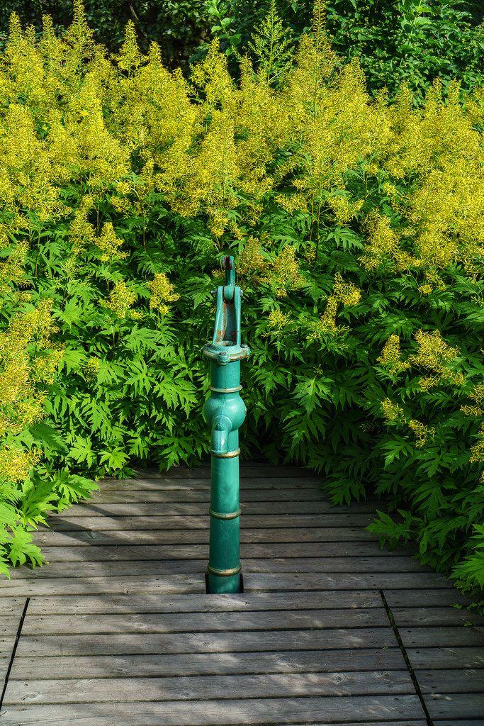 From Botanical Garden in Oslo