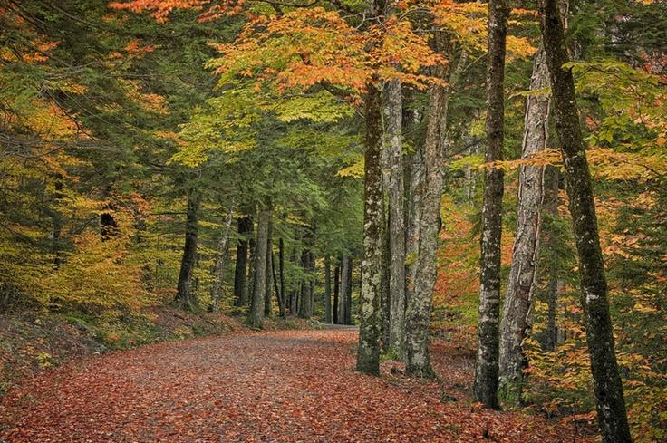 Carriage Path, Acadia National Park by Alan Borror, via 500px