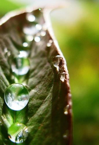 Agua, fuente de vida.