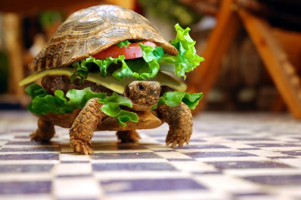 χελωνο-σάντουιτς