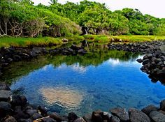 """Morning reflection in a hot spring near Ahalanui Hot Spring, Puna Hawaii.  In Hawai'ian, """"Puna"""" means """"spring"""" and there are a fabulous array of hot, warm and cold springs in the Puna District: Photo by Donald B MacGowan"""