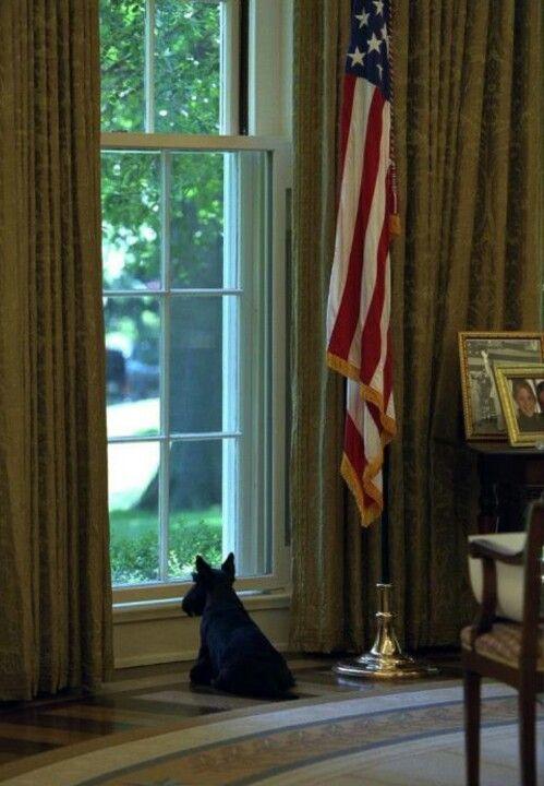 Barney. President George W. Bush's scottie.