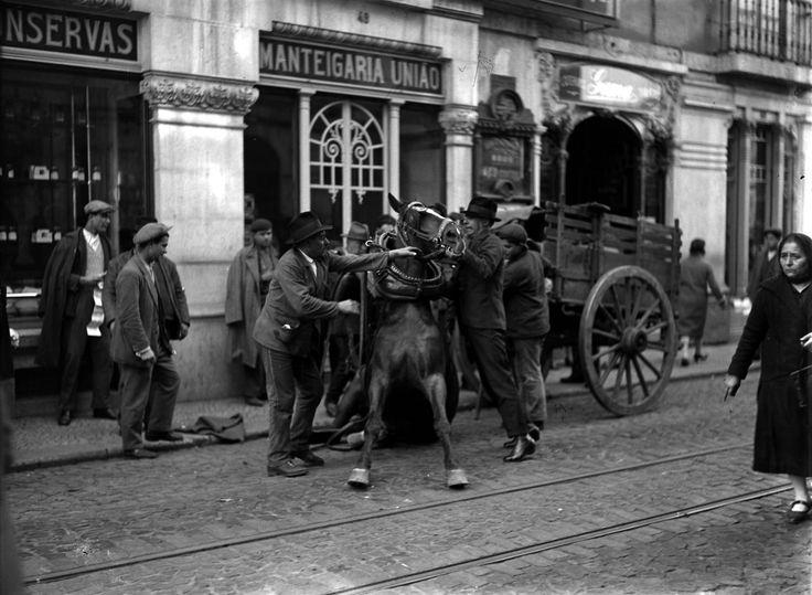 Cavalo caído, R. Amparo (C.Ferreira, s.d.)