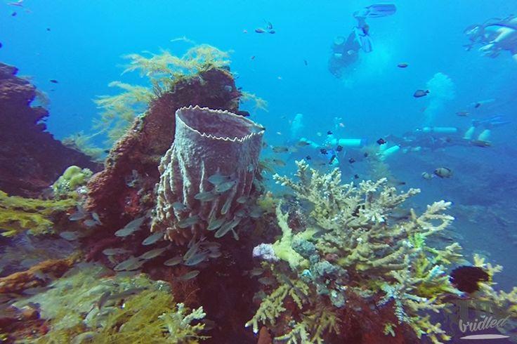 Die Gegend um Amed ist besonders für das Schnorcheln und Tauchen berühmt #reisen #Amed #Bali #tauchen #schnorcheln #Unterwasserwelt #Korallen