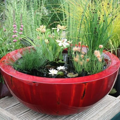 Red Glass bowl Water garden…I came across this darling little water garden for a small space. Looks very easy. You can put a goldfish in the bowl to keep fungi from growing!