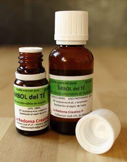 Te ofrecemos un listado con todas las aplicaciones medicinales que se le pueden dar al aceite esencial de árbol de té. Sus usos en animales y en limpieza.