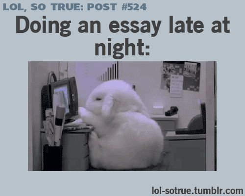 LOL!!!! I just want to know who filmed a bunny falling asleep at a mini desk.