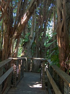 Sarasota Florida Botanical Gardens And Florida On Pinterest