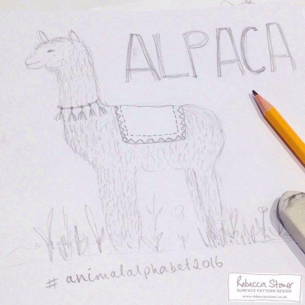 Alpaca Sketch by Rebecca Stoner