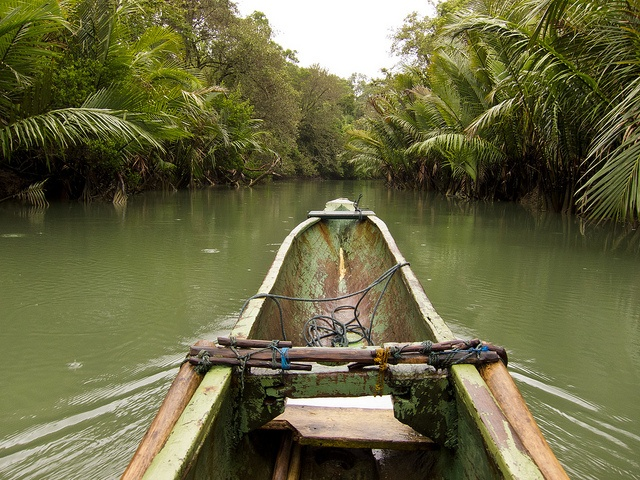 Canoe though jungle, Pulau Peucang, Ujung Kulon
