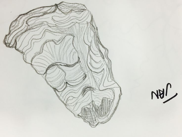 Contour Line Drawing Face : 133 best develop your drawing images on pinterest painting