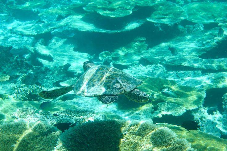 Filitheyo Island, Maldives, paradise on earth, travel, vacation, beautiful place, wanderlust, tropic, sea turtle