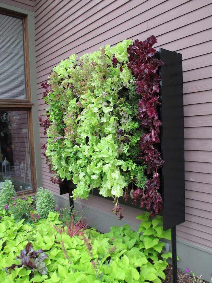 petit jardin potager vertical de laittues frisées vertes et rouges