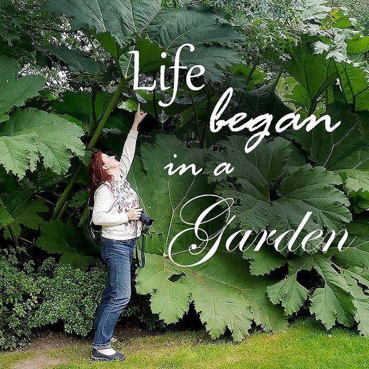 #gardenlife #trädgårdsliv #trädgård #wexthuset #gardenlifestyle #trädgårdscitat #gardeninspo #trädgårdsinspiration #moderjord #grönska #ilovegardening #trädgårdsdrömmar #odlaenkelt #hemodlat #gardenquotes #levgrönt