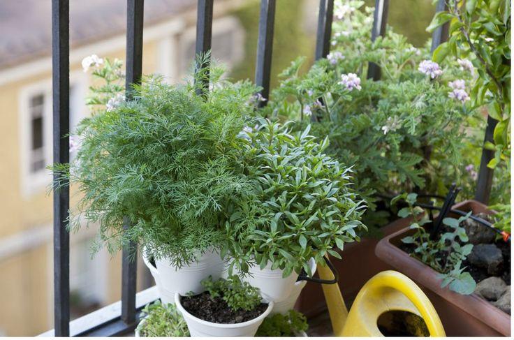Você pode plantar suas mudas ou sementes em vasilhas, vasos, jardineiras, calhas, canos de PVC e até em garrafas PET.