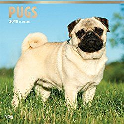 Pugs 2018 Wall Calendar Click Or Dial For Pug Calendars Apparel And Supplies That Donate To Help Feed USA Shelter Dogs