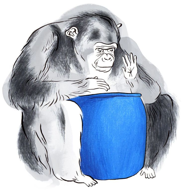 After a chimp is recorded pounding a bucket, researchers run the beats through digital audio software. Please say the ape was playing a Bananarama song.