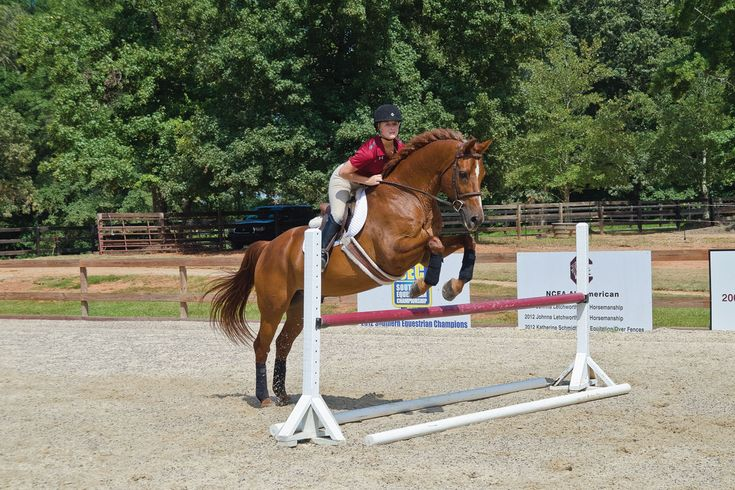 Whatever type of riding you do, the more correctly you use your leg, seat and hand aids to communicate with your horse, the better he will perform.