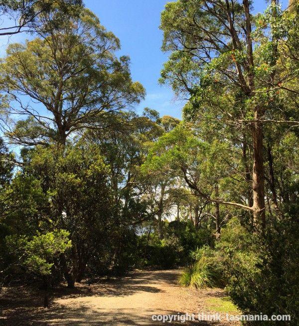 Derwent Bridge - Cradle Mountain - Lake St Clair National Park #Bushwalking #Tasmania article and photo for think-tasmania.com