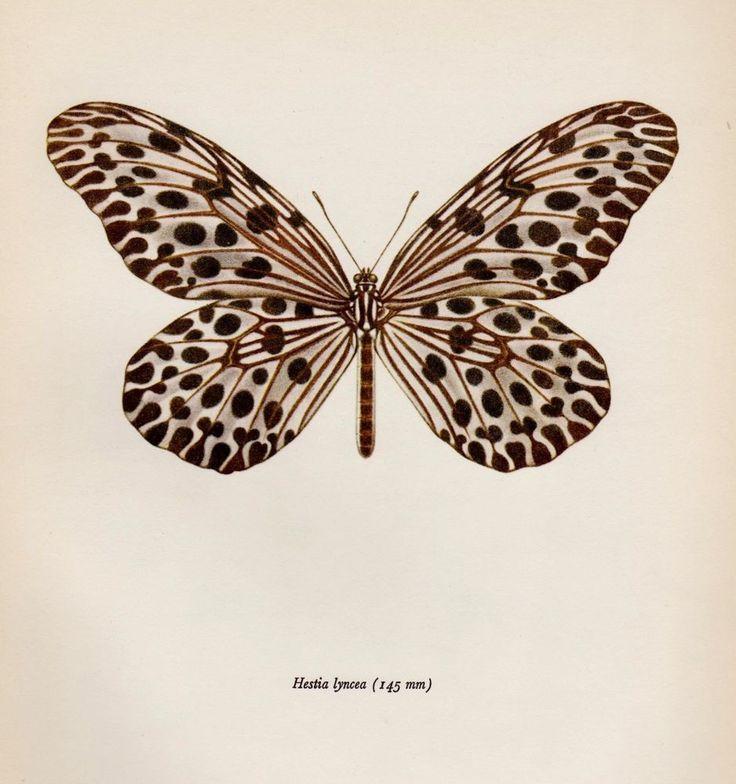 Best 25+ Butterfly print ideas on Pinterest | Butterfly ...