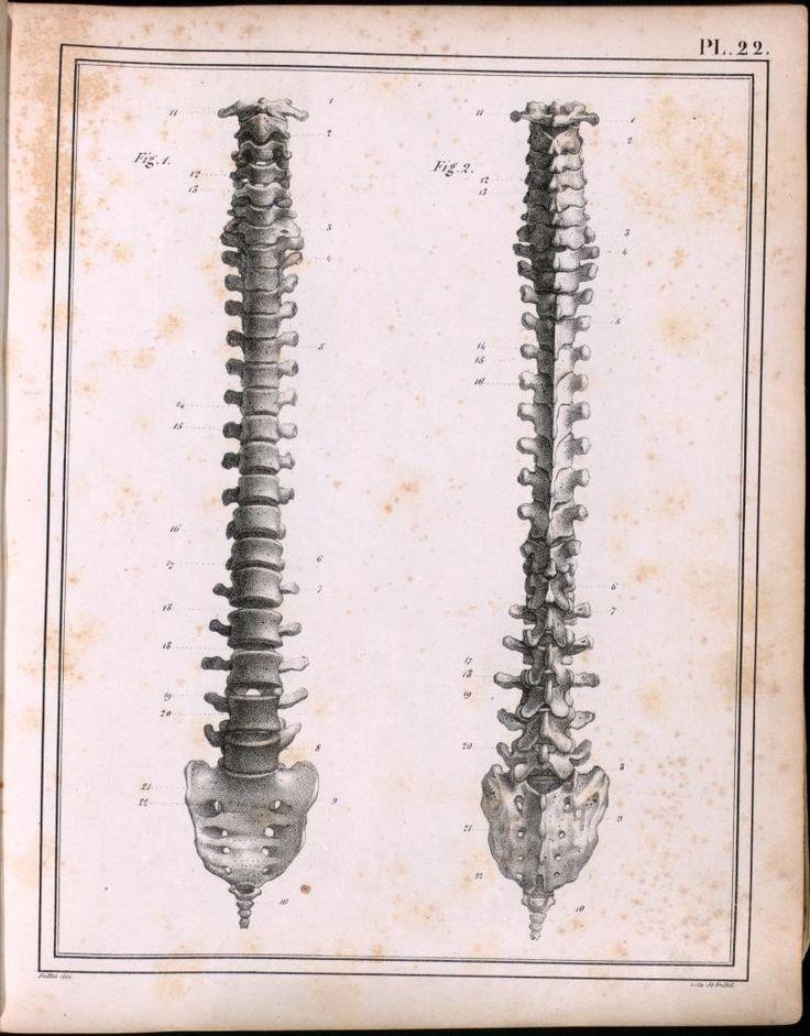 173 best Rheumatology Oldies images on Pinterest   Medical history ...
