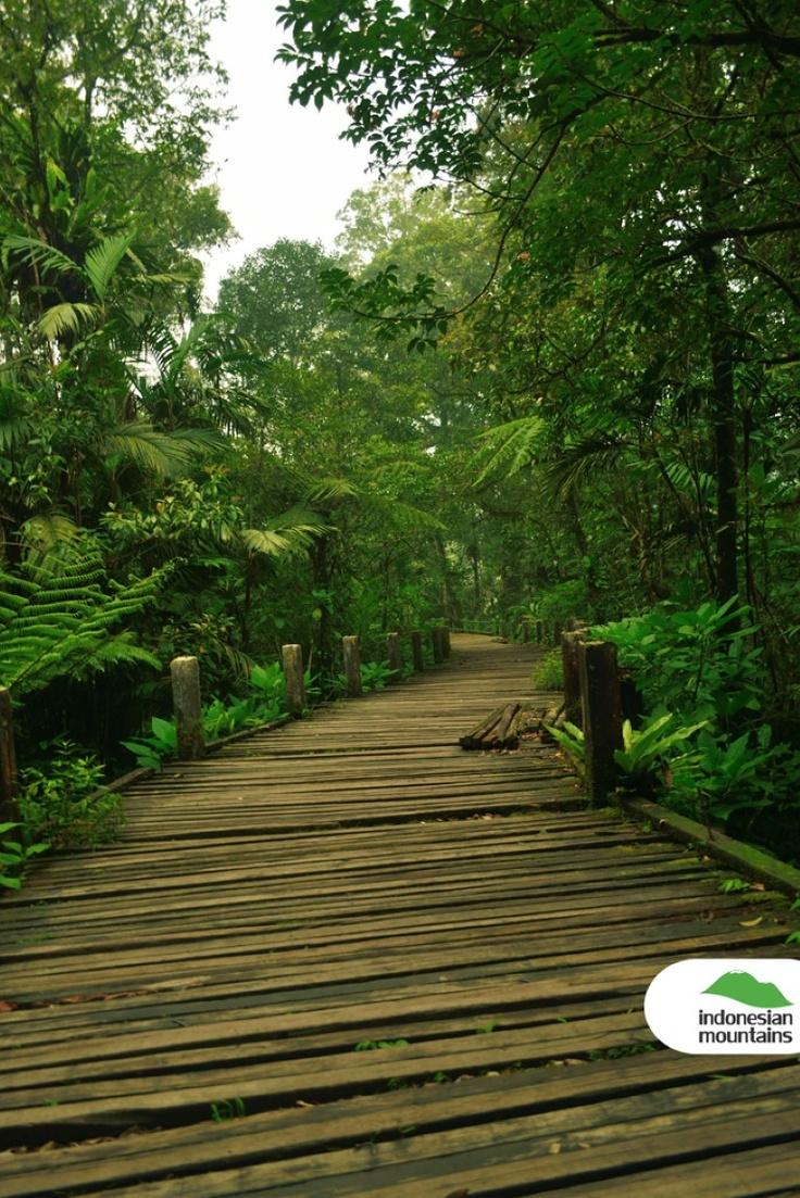 Bayongbong swamp at Mt Gede