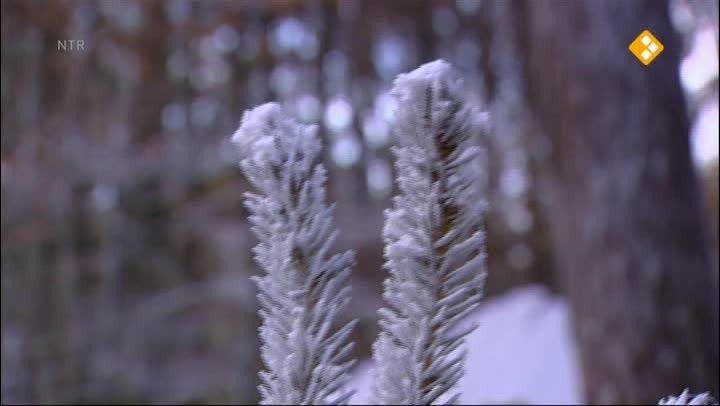 Thema: Winter. Moffel en Piertje maken een sneeuwpop met wortelneus, knoopogen en een warme sjaal. Best zielig, zo alleen. Moffel zet hem daarom lekker binnen, bij de kachel. De volgende ochtend is de sneeuwpop weg! Hoe kan dat nou?