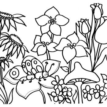 28 best flowers coloring pages images on Pinterest Coloring pages - new dltk coloring pages alphabet