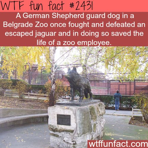 87 Best Facts That Interest Me Images On Pinterest: Why Dogs Are Man's Best Friend? - WTF Fun Facts