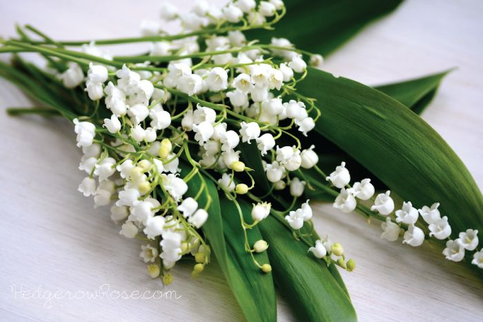 lily-of-the-valley-bouquet