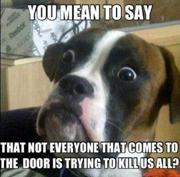 Cutest Cat And Dog Memes