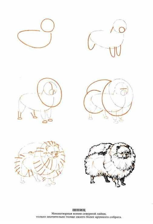 Иллюстрация 8 из 13 для Рисуем 50 собак - Ли Эймис | Лабиринт - книги. Источник: Спанч Боб