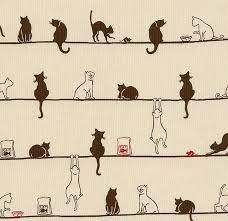 tumblr gatos - Pesquisa Google