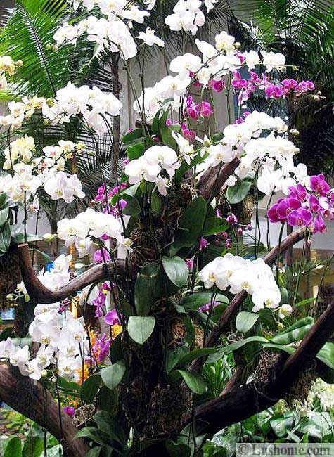 backyard landscaping with orchids beautiful flowers