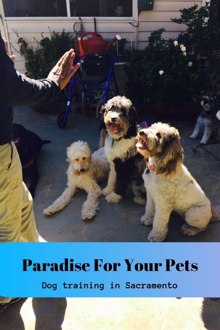 Paradise For Your Pets Was Founded In 2008 By Janie Raju Dog