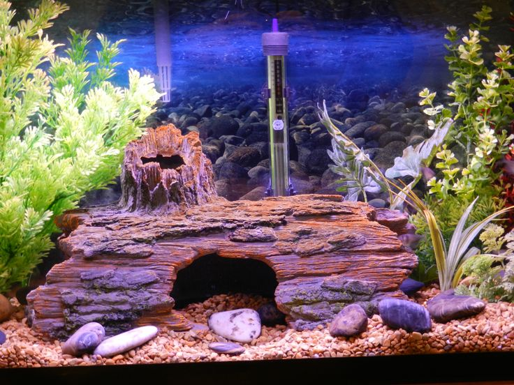 Unique Fish Tank Minecraft