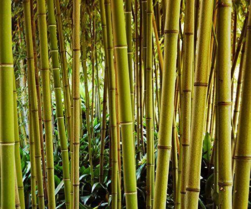 fototapete bambus 300x250cm bildtapete wanddekor bord re tapete kinder stiker bamboo wall mural. Black Bedroom Furniture Sets. Home Design Ideas