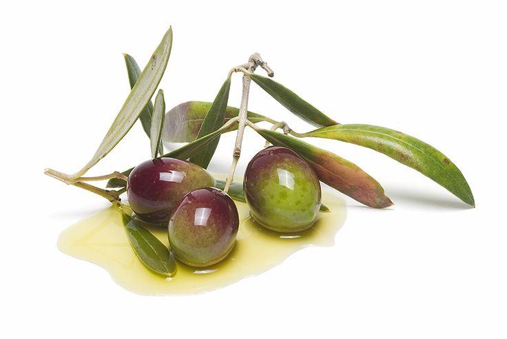 Por qué comprar aceite de cosecha temprana - OLIVADELSUR