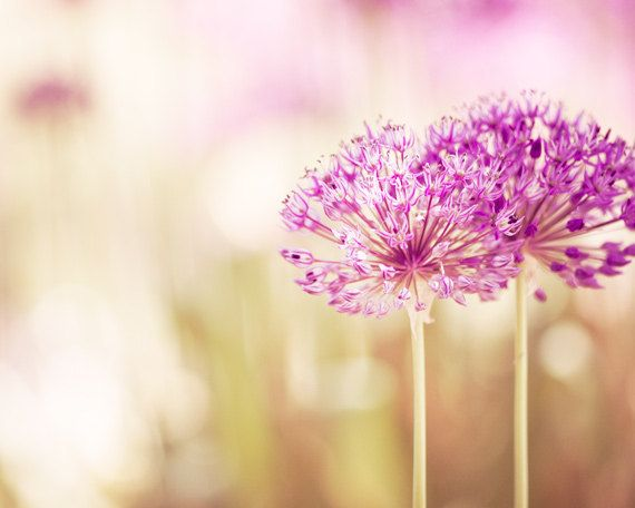 Flower Photography pink decor floral purple